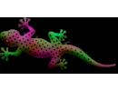 Gecko Monster